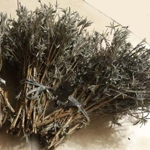 Lavanta Çeliklerimiz Lavandula Angustifolia (40.000-100.000 Adet)